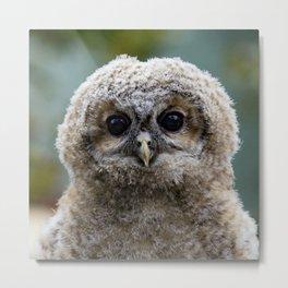 Owl_20180216_by_JAMFoto Metal Print