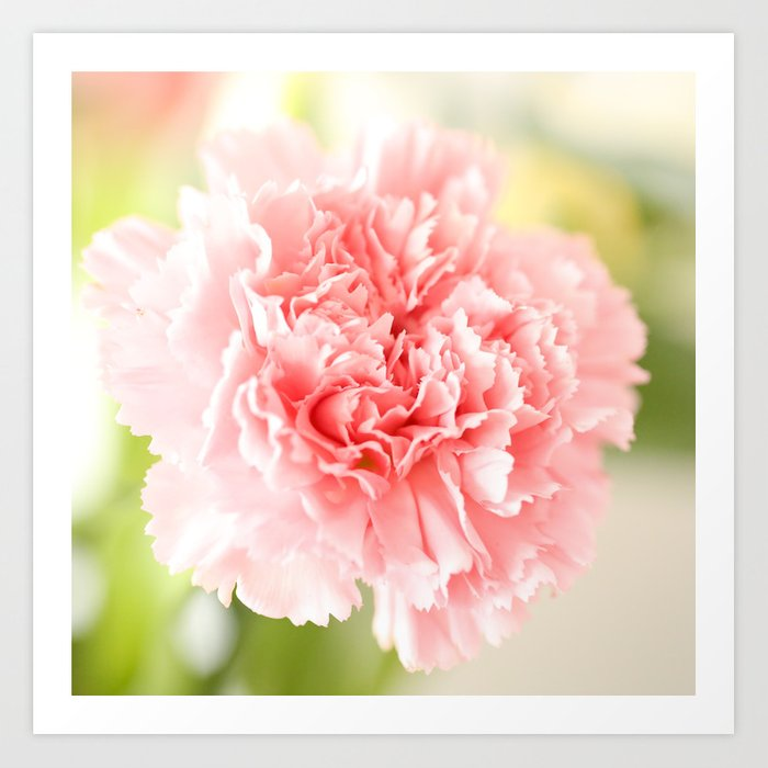 Pink Carnation Admiration  Art Print