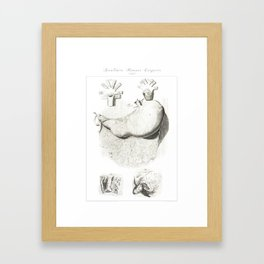 Human Anatomy Art Print STOMACH gastroenterologists Vintage Anatomy, doctor medical art, Antique Framed Art Print