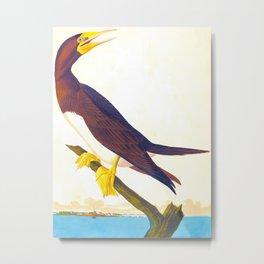 Booby Gannet Bird Metal Print