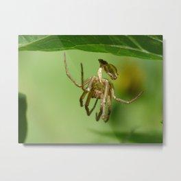 spider exoskeleton Metal Print