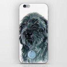 Labradoodle Pair iPhone & iPod Skin