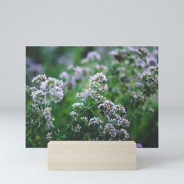 Blooming Oregano Mini Art Print