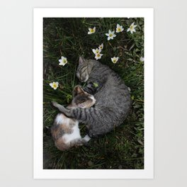 Sleep [A CAT AND A KITTEN] Art Print