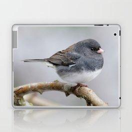 Fluffy Cassiar Dark-Eyed Junco on the Pear Tree Laptop & iPad Skin