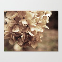 Dried on the stalk Canvas Print