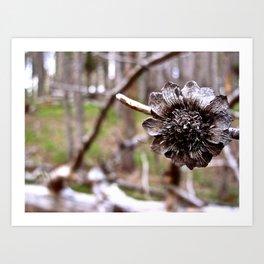 Pine Flower Art Print