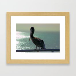 Young Pelican Framed Art Print