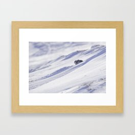 Mountain hare on snow slope Framed Art Print