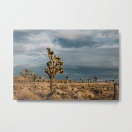 Joshua Tree National Park III Metal Print