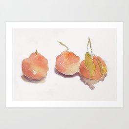 Three Asian Pears watercolor Art Print