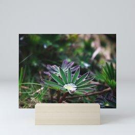 Lupines In Spring 2 Mini Art Print