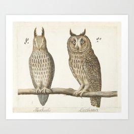 Owls Natural History Illustration, 16th Century Art Print