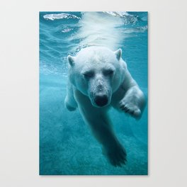Polar Bear Swimming Canvas Print