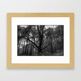 Nature in black and white ~ 2 Framed Art Print