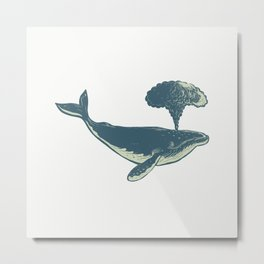 Humpback Whale Blowing Water Scratchboard Metal Print
