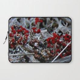 Devil's Matchstick Lichen Laptop Sleeve