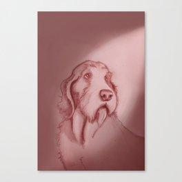 spinone italano Canvas Print