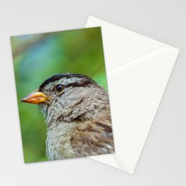 Sparrow the Portrait Stationery Cards