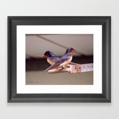 Barn Swallows With Nest Materials Framed Art Print