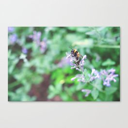 Bee in the Purple Flowers Canvas Print