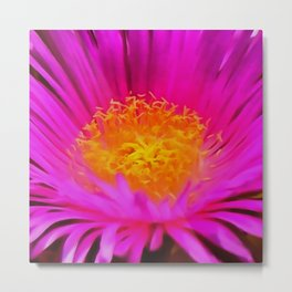 Artistic Bright Pink Aster Flower Close Up Metal Print