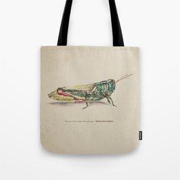 Thomas's two-striped Grasshopper - Melanoplus Tomasi Tote Bag