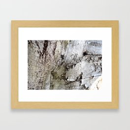 European Beech Tree Trunk Framed Art Print