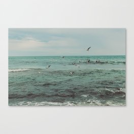 Flock of seabirds Canvas Print