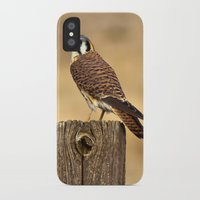 predator iPhone & iPod Cases featuring Predator by Ian Bevington
