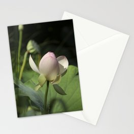 In Delicate Pinks Stationery Cards