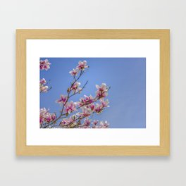 Magnolia branches Framed Art Print