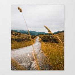 The Roadside Path (Color) Canvas Print