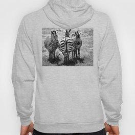 Zebras 3 Hoody