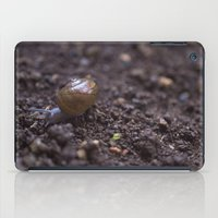 snail iPad Cases featuring Snail by Heartland Photography By SJW