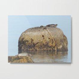 Seals and Boulders Metal Print