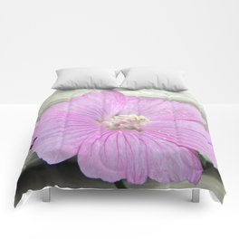 Pink Musk Mallow Comforters