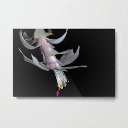 White Christmas Cactus Metal Print