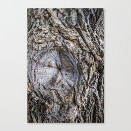 Owl's Eye Tree Texture Canvas Print