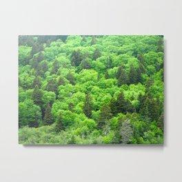 Fundy Trail Trees Metal Print