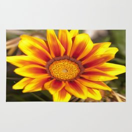 Southern African ❁ Yellow Gazania Flower  Rug