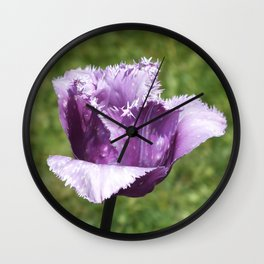 Purple Fringed Tulip Wall Clock