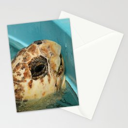 Sea Turtle Close up Stationery Cards