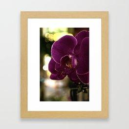 Huntington Orchid Framed Art Print