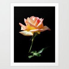 Rose of St. James Art Print