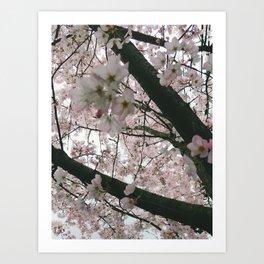 In Bloom '17 Art Print