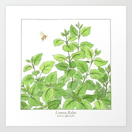 Lemon Balm Art Print