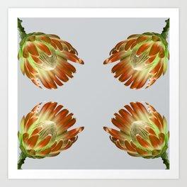 Tulip_sugerbush_Orange Protea Art Print