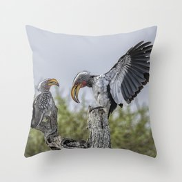 Southern Yellow-billed Hornbills Mating Display, No. 1 Throw Pillow
