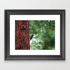 Red-naped Woodpecker Framed Art Print